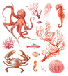 Watercolor red sea animals and plants: crab, octopus, jelly fish, coral and seahorse. Poster with nautical creatures isolated on white background. Underwater clipart