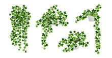 Ivy Creeper Plants In Pot Isolated On White Background. Green English Ivy Liana Houseplants With Climbing Branches. Realistic Vector Illustration Of Hanging Hedera Vines