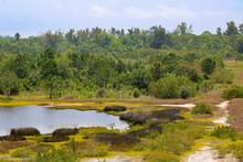 Overlook Of A Marsh Swampland