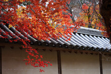 Maple Foliage Over The Roof And Fallen Leaves On The Leaves Of A Japanese Architecture In A Peaceful, (Autumn Season In Japan).