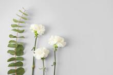 Fresh Carnation Flowers On Grey Background