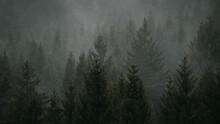 Moody Forrest In Fog