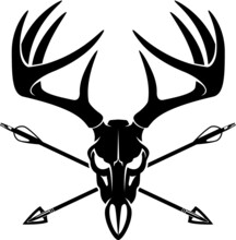 Whitetail Buck Skull With Crossing Hunting Arrows