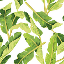 Tropical Floral Banana Leaves Seamless Pattern White Background. Exotic Jungle Wallpaper.