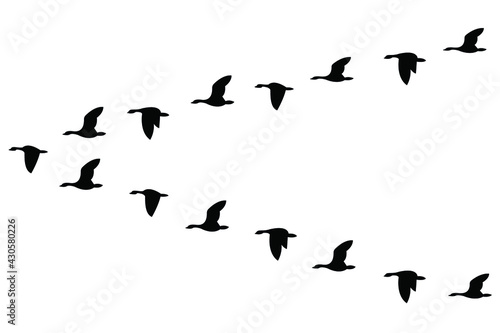 Valokuvatapetti A wedge of geese flying in the sky, isolated on a white background