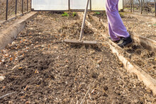 Woman Preparing Vegetable Bed For Planting At The Early Springtime. Loosening The Soil With A Rake In The Greenhouse.