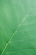 Leinwandbild Motiv Selective focus.Small plant of Teak Tree in Thailand