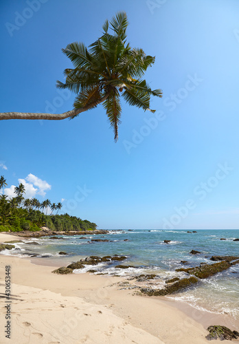 Tropical beach with coconut palm tree on a sunny summer day.