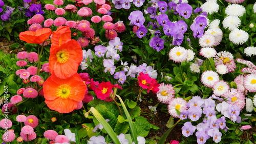 Fotografía Fleurs printanières