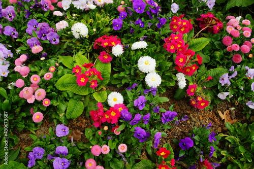 Cuadros en Lienzo Fleurs printanières