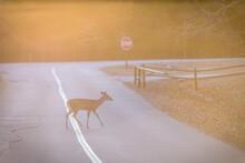 Deer Crossing