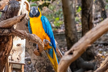 Closeup Shot Of An Ara Macaw Perched On A Branch