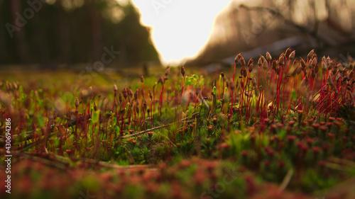 Obraz forest litter - fototapety do salonu