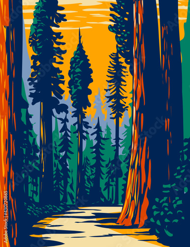 Fototapeta WPA Poster Art of the Simpson-Reed Grove of Coast redwoods located in Jedediah Smith State Park part of Redwood National and State Parks in California done in works project administration style. obraz
