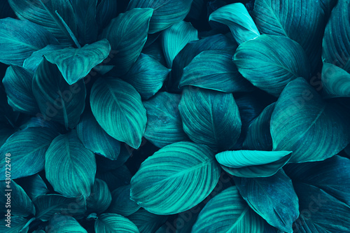 tropical leaves, blue nature background, toned process Fototapet