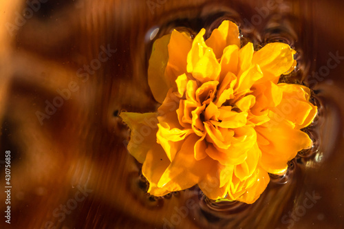 Canvastavla Top view of a Kerria japonica Pleniflora flower isolated on the water - yellow J