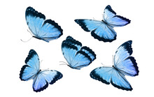 A Set Of Beautiful Blue Butterflies Isolated On A White Background. Tropical Moths. Flying Insects For Design