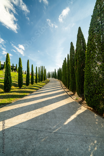 Fototapeta premium Scenic view of a typical Tuscan landscape with a group of cypresses against a blue sky. Tuscany, Italy, Southern Europe.
