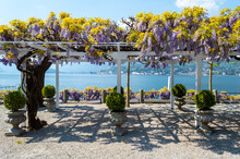 Nice Canopy Covered In Wisteria Flowers...beautiflu Purple And Yellow Colors In Front Of Lake Como In The Little Town Of Bellagio Northern Italy