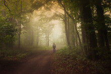 Man Walking On Green Forest Road