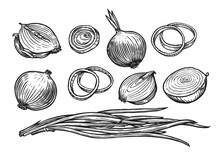 Onion Bulb And Rings. Fresh Vegetables Sketch Vector Illustration