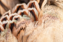 Close Up Of Brown Feathers