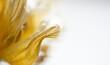 Leinwandbild Motiv gelbe Tulpenblätter verwelkt, close up