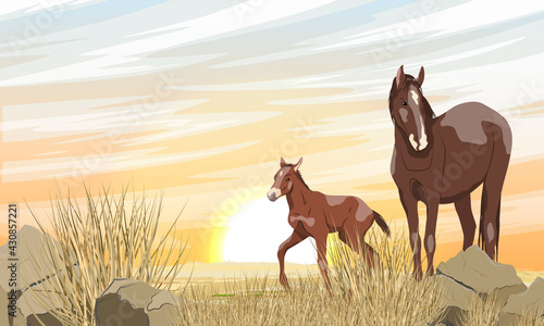 Fotografia A brown horse with a white spot and its foal are walking along a desert rocky area with stones and dry grass