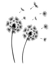 Set Of Dandelions. Black Silhouette Of Two Dandelions On A White Background. Floral Patterns, Clipart. Spring Flower With Flying Seeds. Vector Illustration. Monochrome Drawing.