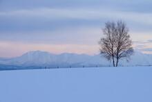 美瑛町の冬景色 一本木と十勝岳連峰
