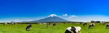 静岡県富士宮市の朝霧高原牧場の牛の群れと雄大な富士山