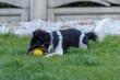 młody pies bawi się na trawie