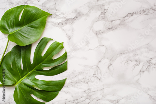 Fototapeta monstera leaf tropical plant on marble background obraz
