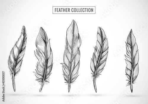 Hand draw feather sketch set design Fototapete