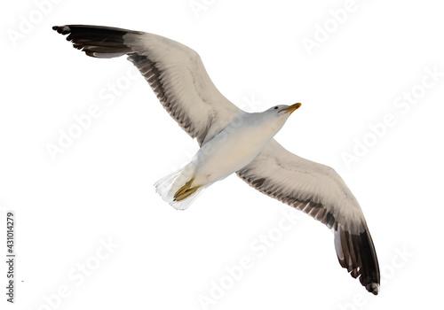 Obraz na płótnie Flying seagull isolated on white background