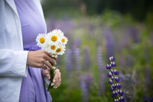 The Girl Holds In Her Hands A Delicate Bunch Of Field Daisies. Girl In A Field On A Warm Summer Day With Purple Lupins In The Background.