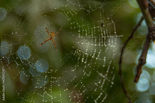 Vászonkép araignée