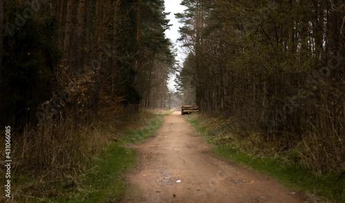Droga prowadząca przez las sosnowy. W oddali skład drewna. - fototapety na wymiar
