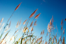 A View Of A Windy Day On A Sugar Cane Field Shot With Tilt Shift Lens.