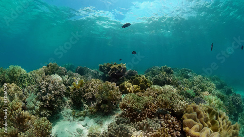 Fotografia Tropical fishes and coral reef at diving