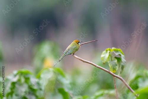 Fototapeta premium Closeup shot of a Hummingbird perched on a branch