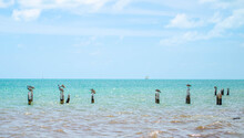 Pelicans Atop A Line Of Dock Pilings In The Ocean In The Florida Keys, Sailboat On The Horizon