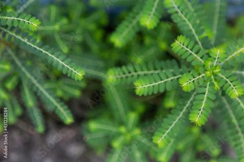 Fotografie, Obraz Closeup shot of green gale of the wind leaves
