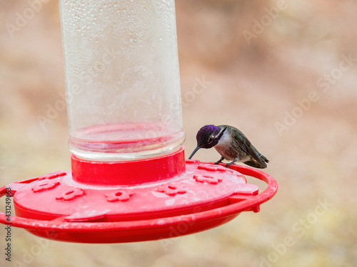 Fototapeta premium Close up shot of cute hummingbird on a bird feeder