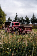 Chevy 1950 Old Truck In A Farm
