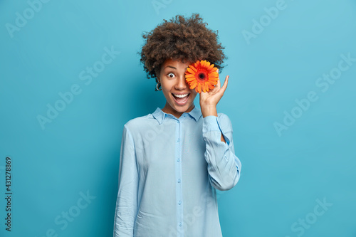 Fototapeta Beautiful African American woman covers eyes with fragrant orange gerbera or daisy flower wears festive shirt isolated over blue background has natural beauty perfect smile. Eco friendly female obraz