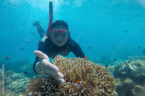 Fototapeta Woman snorkeling underwater with clownfish in coral reef sea at Karimun Jawa