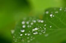 Regentropfen Auf Einem Grünen Blatt