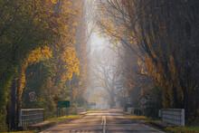A Landscape Photo Of Misty Morning In The Main Road To Latrobe, Tasmania, Australia