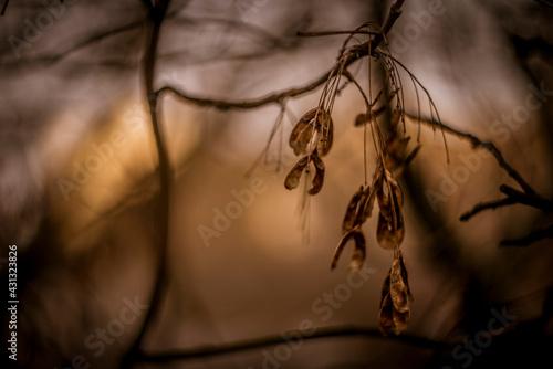 jesień, zachód słońca, depresja, noski, drzewo